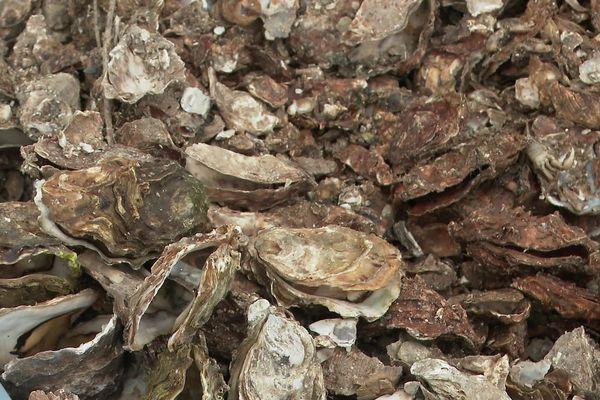 Que faire de nos coquilles d'huîtres ? Pourquoi pas les transformer en assiettes de porcelaine ?