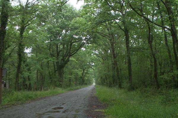 Un sentier dans la forêt de Bouconne