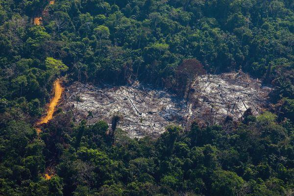 L'effet de la déforestation sur le territoire des Menkragnoti, dans l'Etat du Para.