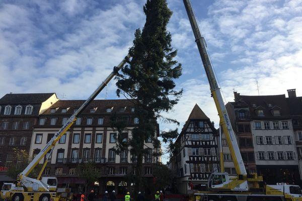 Le levage du grand sapin de Noël, place Kléber à Strasbourg