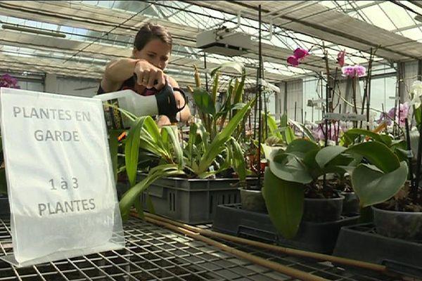 Des orchidées en pension, à Boissy-Saint-Léger, dans le Val-de-Marne.