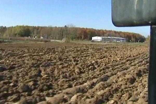 Terre en jachère : Les Hauts-de-France ont retourné trop de prairies permanentes
