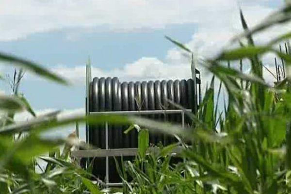 Nouvelle conséquence de la sécheresse : Les canons d'irrigation sont à l'arrêt dans les champs de maïs d'une vingtaine d'exploitants agricoles de l'Allier.