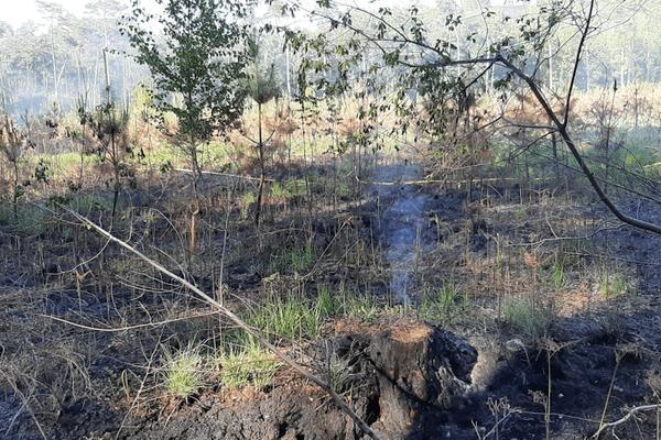 1000m2 de végétation sont partis en fumée dans la forêt de Raismes.