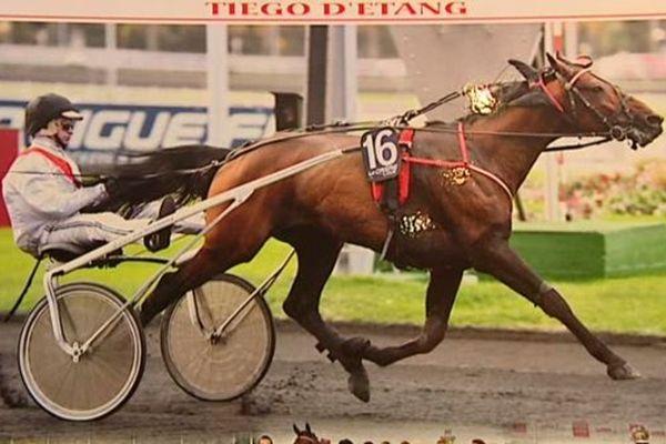 Tiégo d'Etang, l'un des 18 chevaux participant au prestigieux Prix d'Amérique 2016.