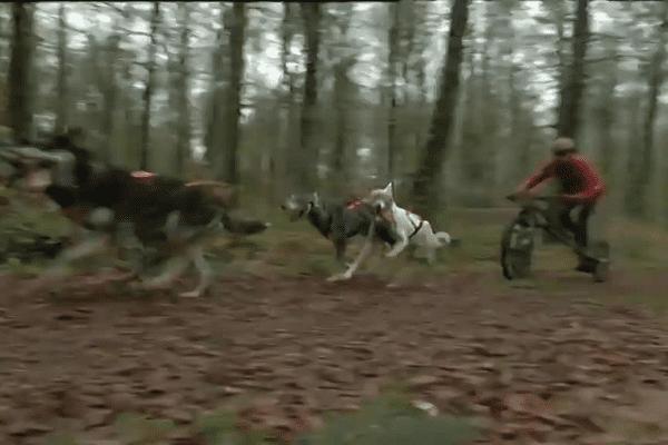 Un kart léger traîné par quatre chiens de traineau