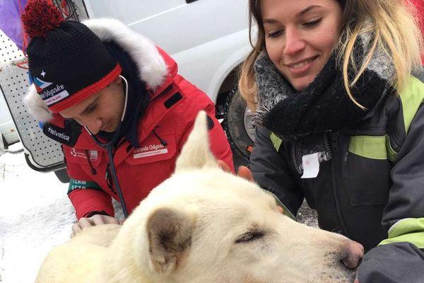Les vétérinaires effectuent les contrôles des équipages, ce samedi 12 janvier, avant le départ de l'épreuve
