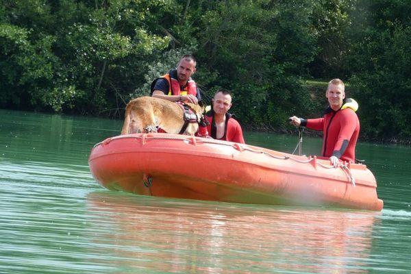 Exercice de sauvetage sur l'étang de Juvigny (Marne). Deux sapeurs-pompiers plongeurs sont épaulés par un pompier maître-chien pour une simulation de noyade.