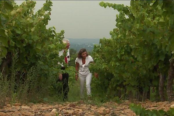 Dans les vignobles les compagnons des côtes du Rhône sélectionnent chaque année trois mille bouteilles