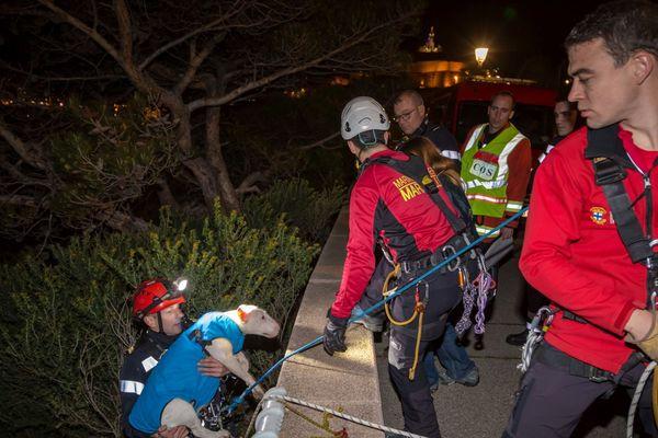 Un Bull terrier a été sauvé par les marins-pompiers de Marseille ce dimanche soir.