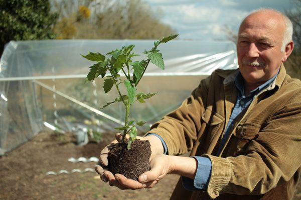 Hubert le jardinier recommande de protéger les pieds de tomates, que l'on plante.