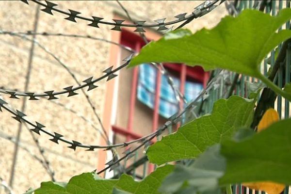 Avec le module respect, les détenus peuvent travailler dans le potager installé au sein de la prison.