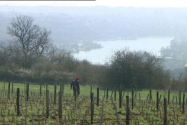 Des vignes à Dijon : le domaine de la Cras