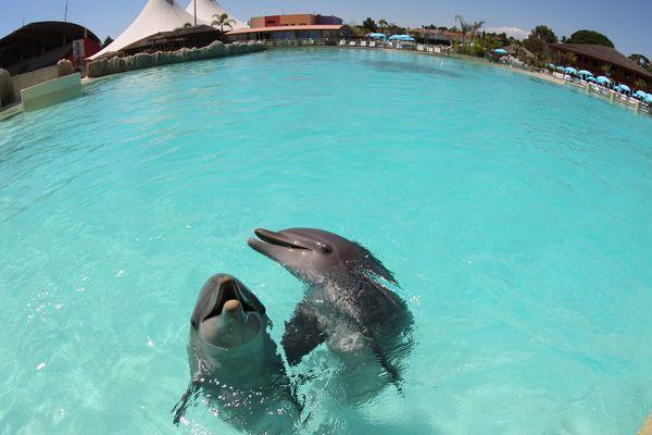 L'émission Thalassa enquête ce vendredi 24 février sur un animal exceptionnel : le dauphin.
