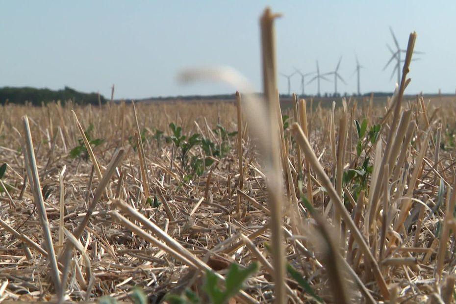 Agriculture : la sécheresse persiste dans l'Yonne et compromet les semis d'automne