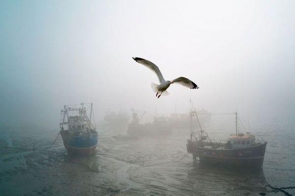 CEDRIC DELVES, FOLKESTONE, KENT, ANGLETERRE, S. D. Une mouette vole au-dessus des bateaux de pêche, dans le port de Folkestone.