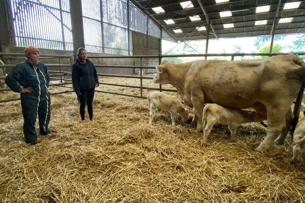 La vache Macarena de la ferme bas-rhinoise Ernwein a mis au monde des triplés le 5 octobre.