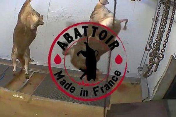 Images clandestines tournées à l'abattoir d'Alès, dans le Gard - 14 octobre 2015