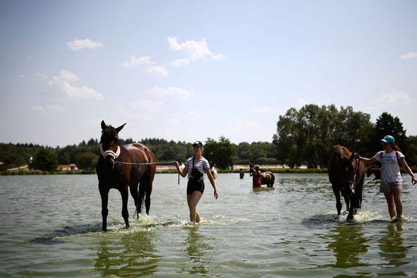 A Lamotte-Beuvron, les chevaux barbotent dans les lacs du parc.
