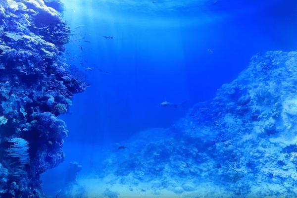 Exposition la grande barriere de corail à partir de septembre 2017 au Panorama XXL de Rouen.