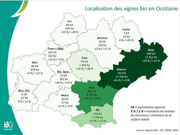 La majorité des vignes cultivées en bio en Occitanie se trouvent dans l'Hérault, le Gard et l'Aude.