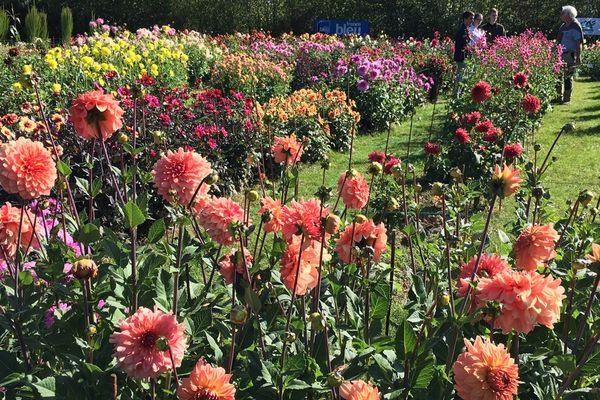 Le campus nature du lycée horticole abrite près de 300 variétés de dahlias