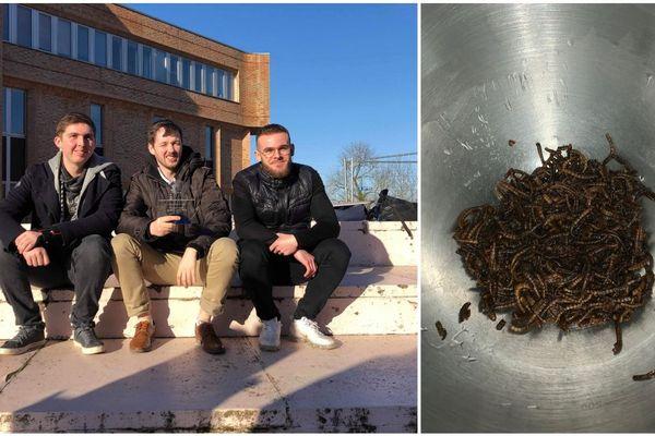 Antoine, Lucas et Pierre ont utilisé comme insectes comestibles ces vers molitors auxquels ils ont rajouté d'autres ingrédients comme du chocolat, du miel ou encore de la poudre d'amande.