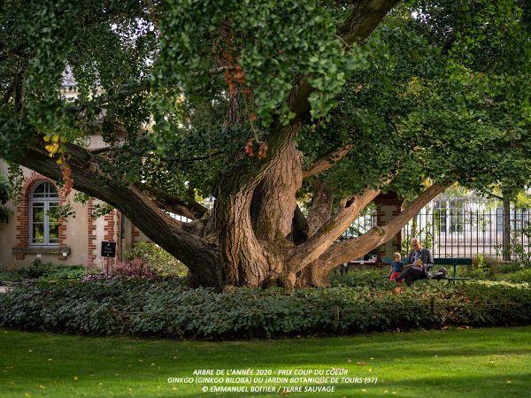 Cet incroyable Ginkgo Biloba a été planté il y a 170 ans au Jardin Botanique de Tours