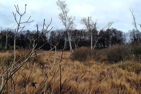 Un paysage typique des tourbières de la Bar : le marais et son herbe vivace appelée calamagrostis des marais.