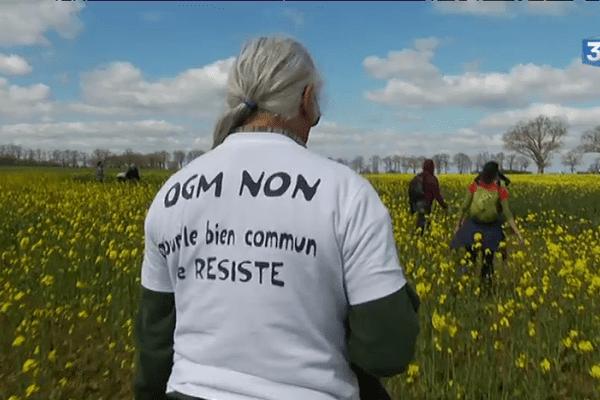 Pas question d'expérimentation pour ces faucheurs d'OGM.