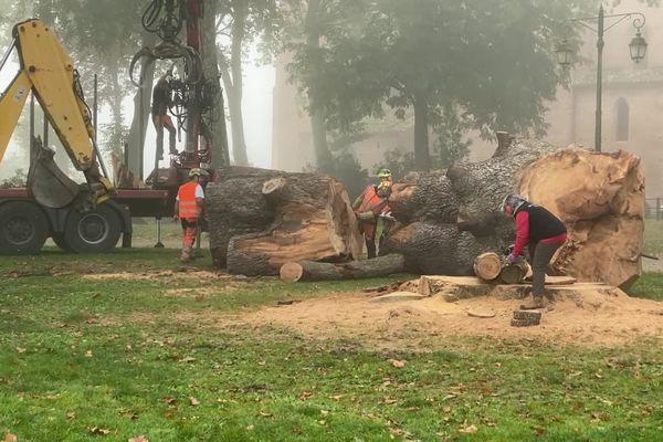 Des ouvriers en train d'abattre un cèdre au jardin de l'Évêché à Lavaur (Tarn), le 11 octobre 2021.