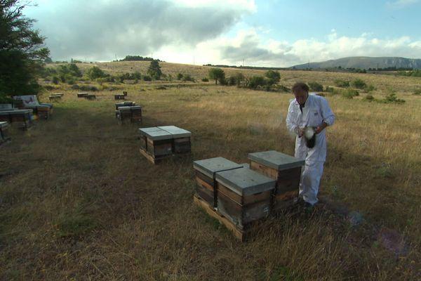 Pour les producteurs de miel de Provence, c'est maintenant que la saison commence vraiment, au moment où la lavande est en fleur. C'est la transhumance des ruches.