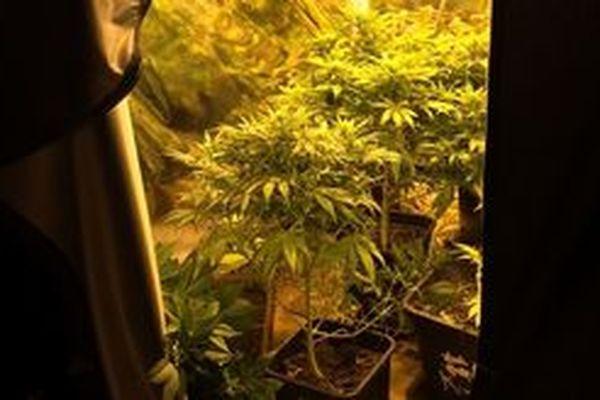 Les gendarmes ont découverts 26 pieds de cannabis et de la résine dans une maison