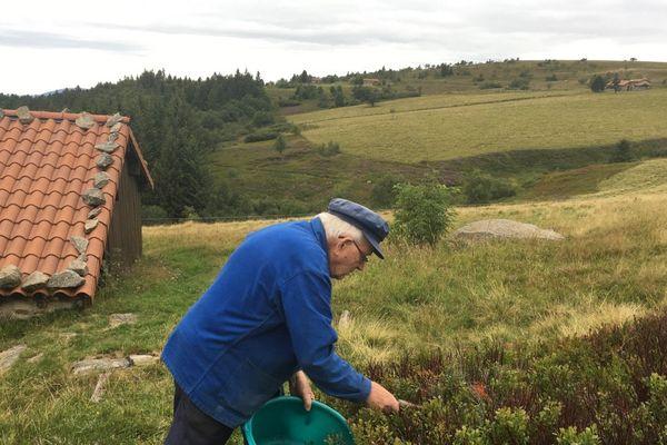 Alain Denis a ramassé très peu de myrtilles sur sa propriété. La faute aux gelées tardives et aux vols qui se multiplient...