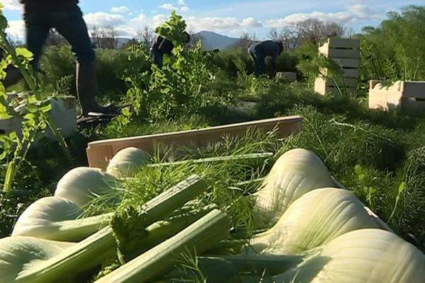 Dans les Pyrénées-Orientales, le bio connait un réel succès depuis quelques années - Janvier 2017