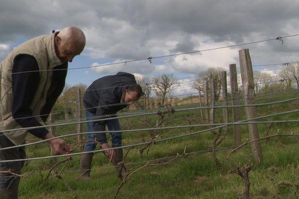 François Lecourt (et son père au premier plan) dans la vigne plantée au printemps 2021