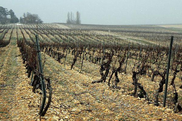 Les viticulteurs pourraient être les plus touchés par les conséquences de l'épidémie de Covid-19