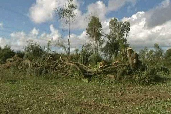 Les arbres coupés sans autorisation la semaine dernière à  Saint Martin d'Aubigny