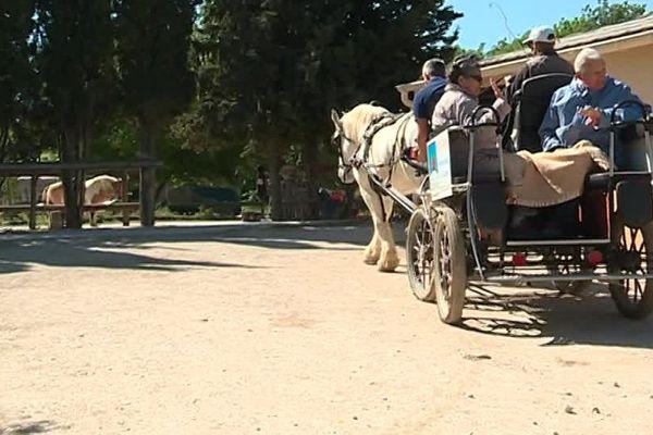 L'équithérapie propose de faire intervenir un cheval ou un poney dans le processus de soins d'un patient - 18 avril 2017