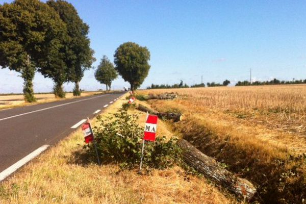 31 arbres abattus entre Luçon et Mareuil/Layon pour laisser passer un convoi. Il ne reste plus rien de la belle haie de tilleuls qui bordait la D746