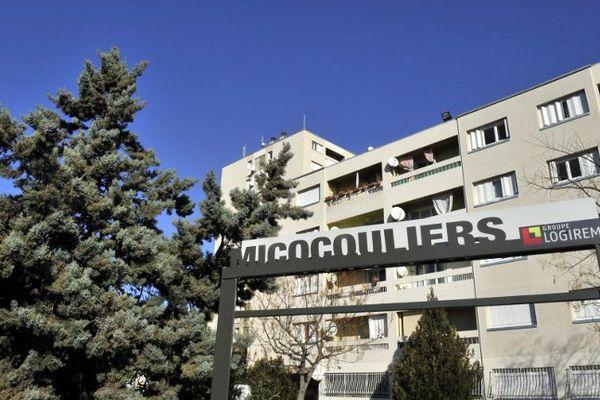 Le dealer a été interpellé dans la cité des Micocouliers, dans le 14ème arrondissement de Marseille.