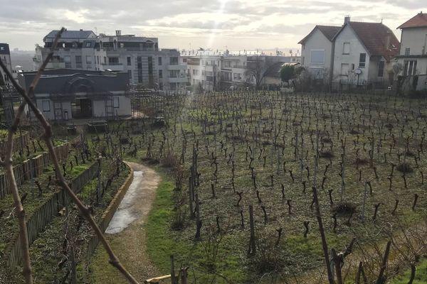 Les vignes de Suresnes font partie des plus anciennes et importantes de la région.
