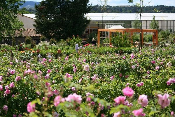 Ce jardin constitue le conservatoire de plantes à parfum du musée, un espace naturel témoin du paysage olfactif lié à l'agriculture locale.
