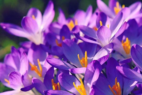 C'est le printemps CC by MabelAmber via pixabay