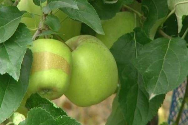 150 plants de pommiers ont été dérobés à Concèze (19). Préjudice financier : 1 000 €