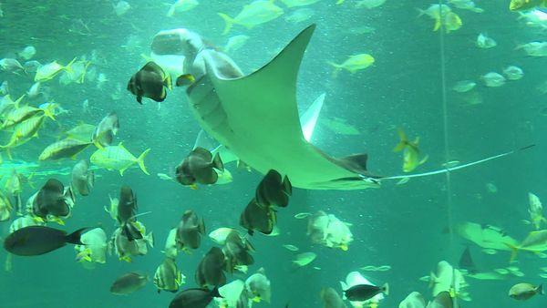 Plus de cinquante espèces différentes cohabitent dans le plus grand bassin de l'aquarium.