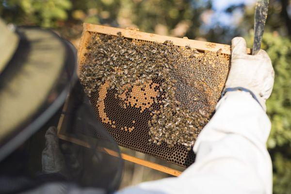 Des miels issus d'un savoir faire familial