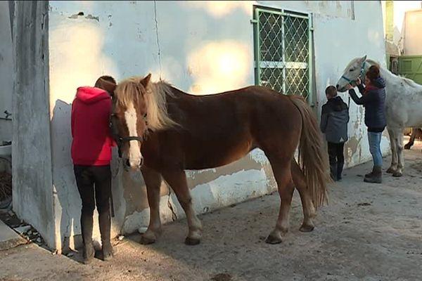 Le cheval a fait son entrée à l'hôpital de Montfavet d'Avignon en 1972.