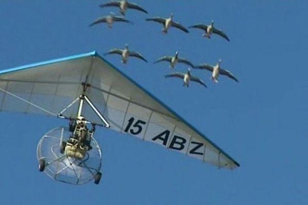 Voler avec des oiseaux et les oies de Christian Moullec représente un rêve pour de nombreuses personnes. En raison de la règlementation européenne, elles ne pourront plus le faire dans le ciel d'Aurillac.