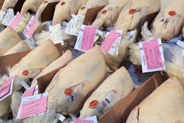 Les volailles primées lors des Glorieuses de Bresse doivent présenter un plumage parfaitement blanc, des pattes bleutées propres et un corps dense.